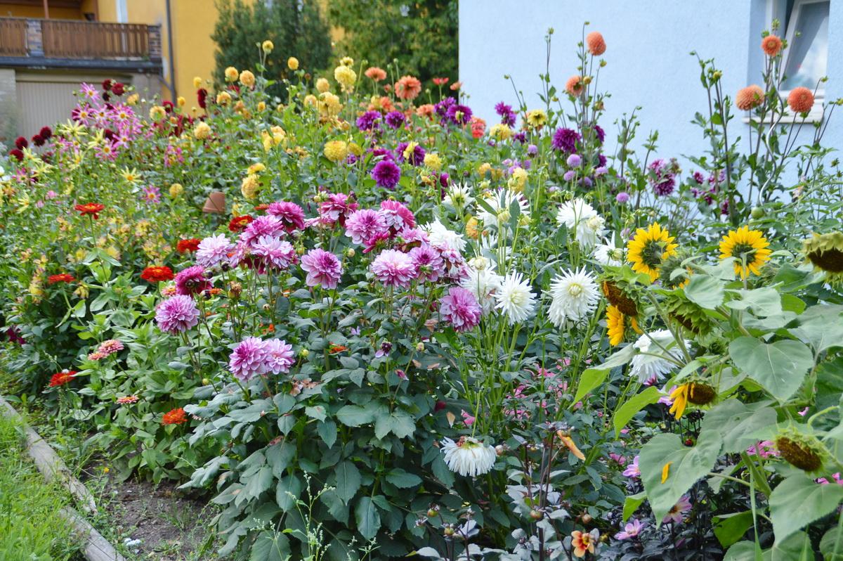 Gartenbäuerinnen Ott Dagmar